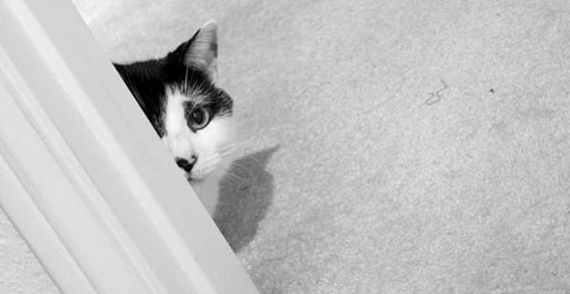 Achten Sie bei Haustieren besonders auf pflegeleichte Küchenstühle